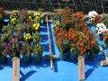 明石の子どもたちの鉢植え作品(その2)